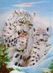 3D Poster - Tigerbabys