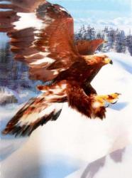 3D Poster - Fliegender Adler