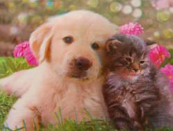 3D Poster - Hund und Katze